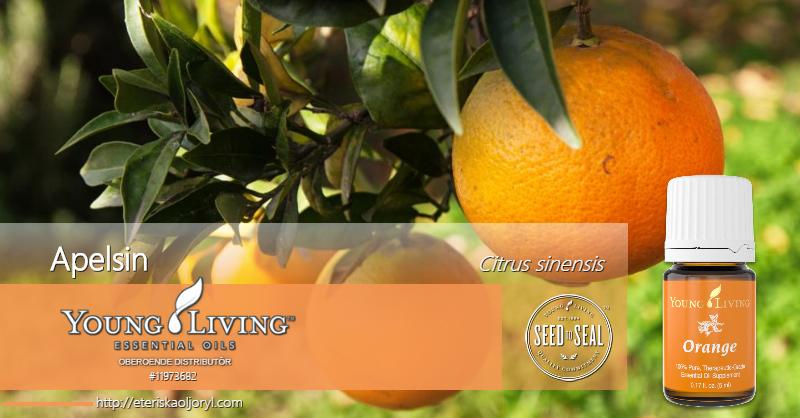 Apelsin eterisk olja Citrus sinensis