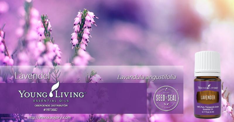 Lavendel eterisk olja Lavandula angustifolia