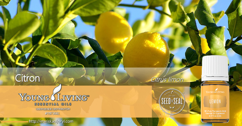 Citron eterisk olja Citrus limon