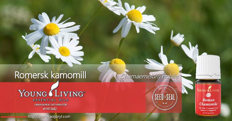 Romersk kamomill eterisk olja (Chamaemelum nobile)