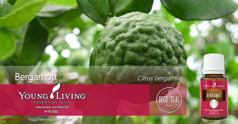 Bergamott eterisk olja Citrus bergamia