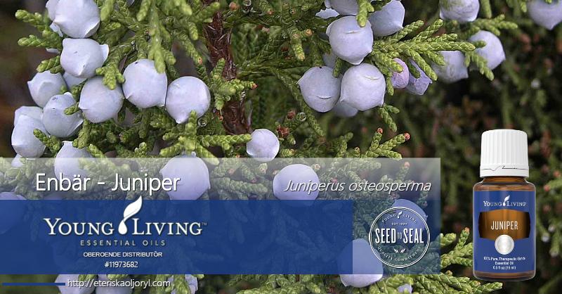 Enbär eterisk olja Juniperus osteosperma