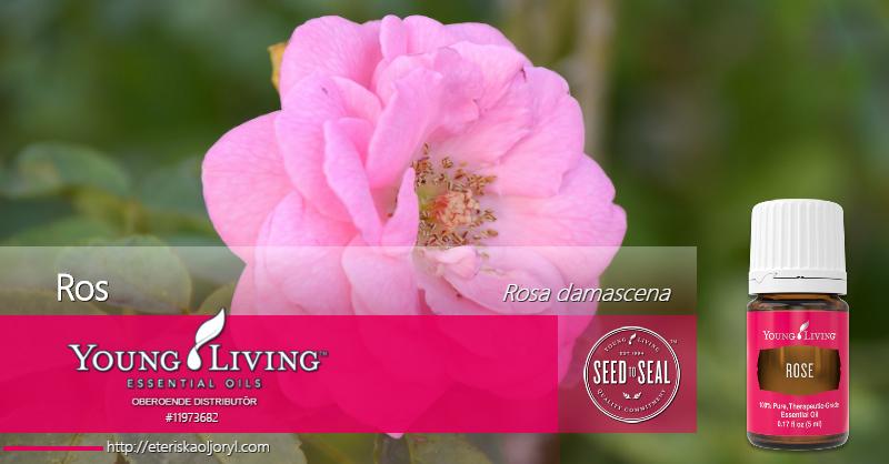 Ros eterisk olja Rosa damascena