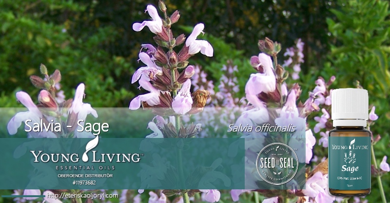 Salvia eterisk olja Salvia officinalis