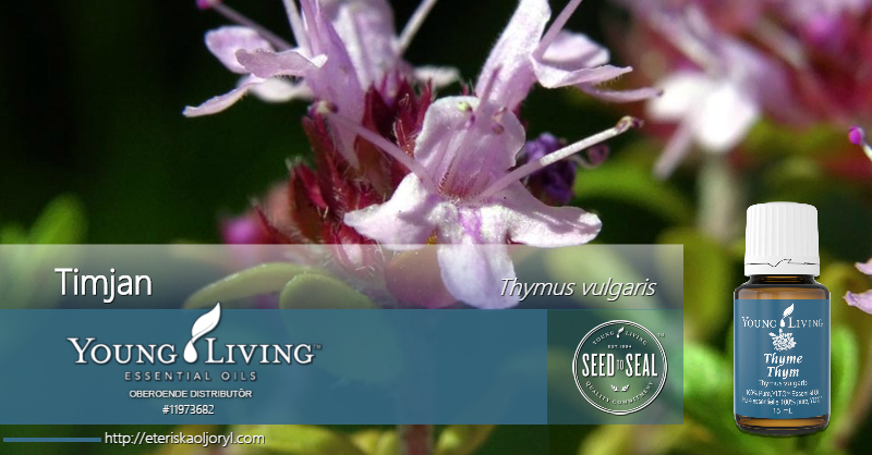 Timjan eterisk olja Thymus vulgaris
