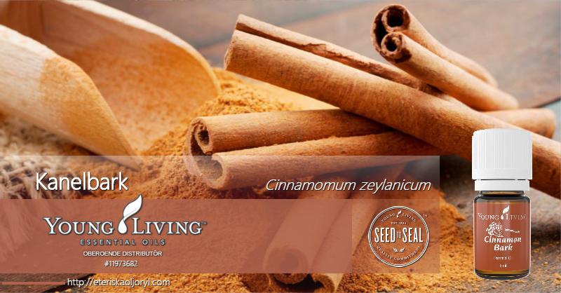 Kanelbark eterisk olja Cinnamomum zeylanicum
